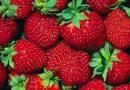 Gyümölcsjégkrém teszt.