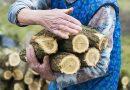 Elbír – Bűnmegelőzési tanácsok olcsó tűzifa vásárlása esetén