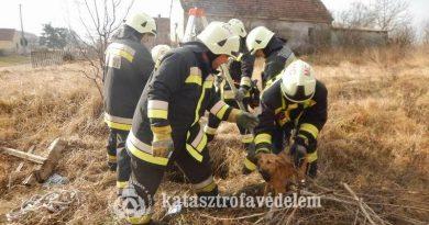 Kútba esett ebet mentettek a marcali tűzoltók