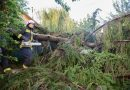 Főként kidőlt fákhoz riasztják a tűzoltókat.
