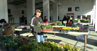 A piacon jártunk. Életerős növények, ismerős termelőktől! – VIDEÓ