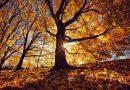 Ma beköszönt a csillagászati ősz, rövidülnek a nappalok